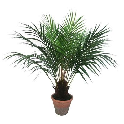 Palm Tree W/ Teracotta Pot - 65X80cmh