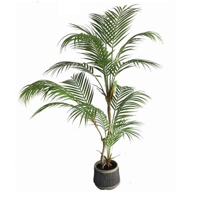 Palm W/ Black & White Pot - 103cmh