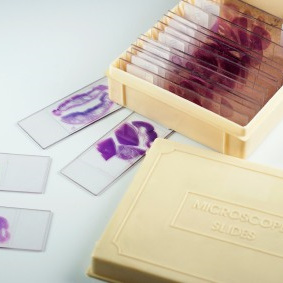 PATHOLOGY / MICROSCOPE SLIDES