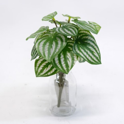 Peperomia Bush - Real Touch - 25cm