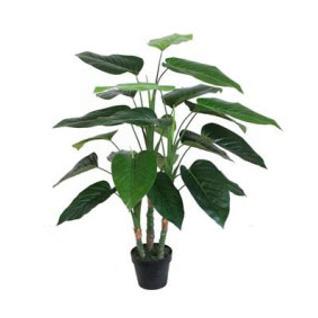 Philodendron W/Pot 100cm