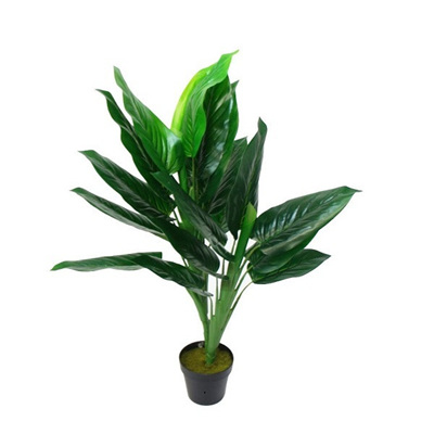 Philodendron with Black Plastic Pot - 110cm