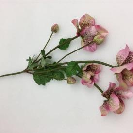 Pink Helleborus - 4 Head, 3 Bud - 61cmh