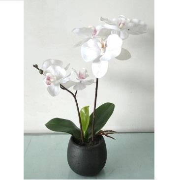 Plastic Orchid In Paper Pot - Cream - 35cmh