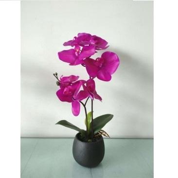 Plastic Orchid In Paper Pot - Dark Red - 35cmh