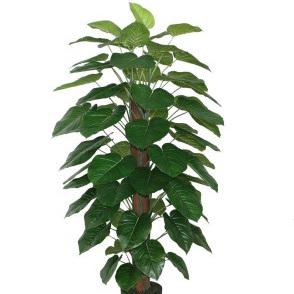 Pothos Pole W/Pot-Green 180cm