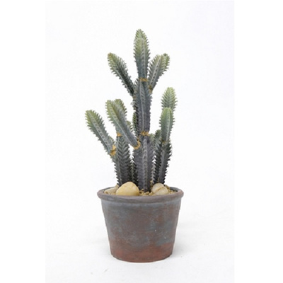 Potted Finger Cactus