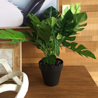 Potted Monstera 45cm