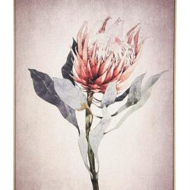 Protea A Canvas Print - Natural Frame/100x140cmH