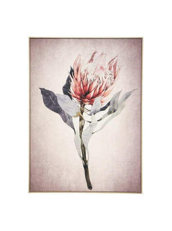 Protea A Canvas Print - Natural Frame/100x140cmH
