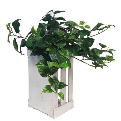 Puff Philo Hanging Bush - 50cm