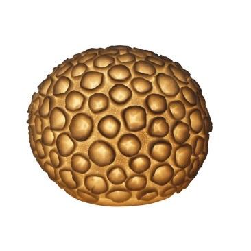 Resin Urchin Lamp - 25cm