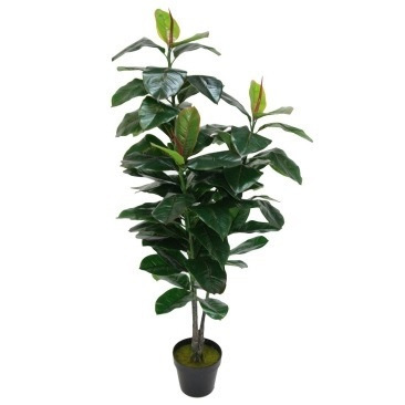 Rubber Leaf Tree Potted 130cm