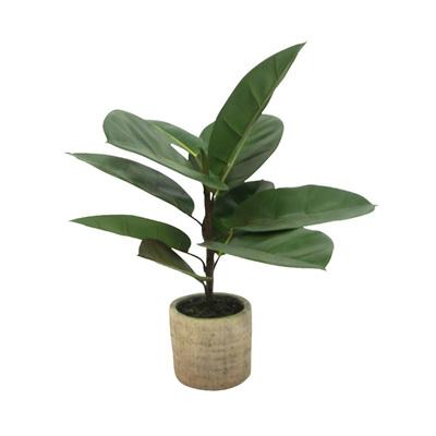 Rubber Tree W/ Terrazzo Pot - 45x33cmh