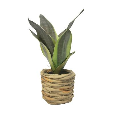 Sansevieria W Woven Pot H20x9cm