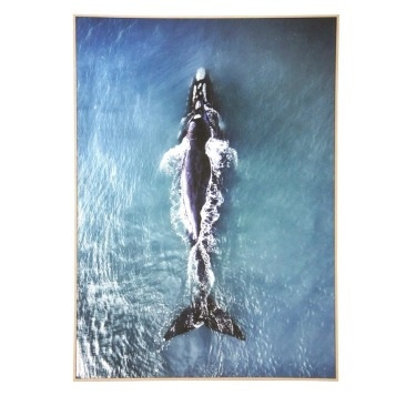 Solo Whale Canvas Art - Natural Frame 100x140cm