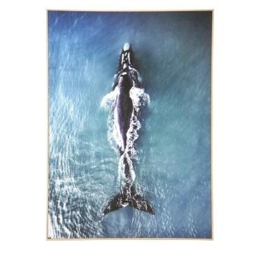 Solo Whale Canvas Art - Natural Frame 100x140cm
