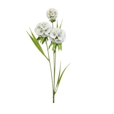 Spiraea - Cream