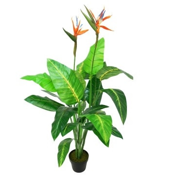 Strelitzia Tree With Black Plastic Pot - 130cm