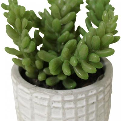 Succulent in Textured Pot