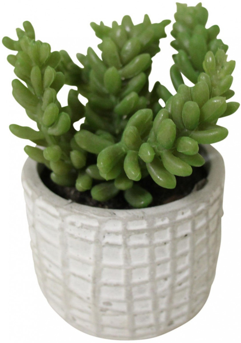 Succulent in Textured Pot