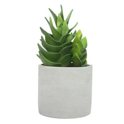 Succulent W Cement Pot H25x12cm