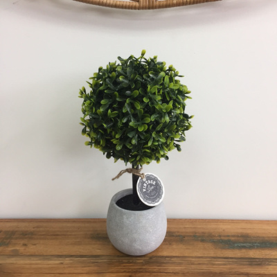 Topiary Tree in Concrete Pot